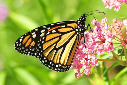 Where to find the most beautiful species of butterfly in Delhi?